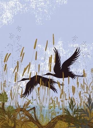 pantanos: Siluetas de dos p�jaros volando sobre un lago