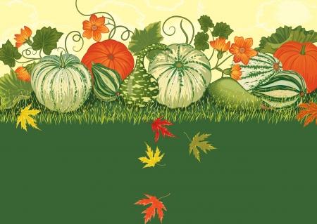 Hintergrund mit reifen Kürbisse unter Gras und dem Herbstlaub Standard-Bild - 14711707