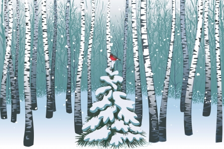 evergreen: Birches in the winter forest Illustration