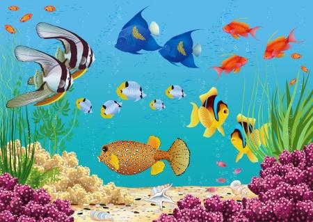 pez pecera: Paisaje subacuático con las plantas de agua y diversos peces tropicales nadan Todos los objetos están agrupados