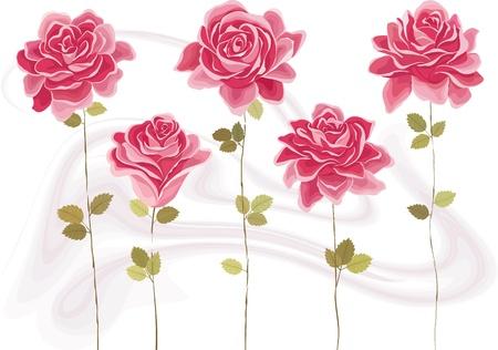abloom: Colecci�n de hermosas rosas rosadas. Cada rosa se agrupa Vectores