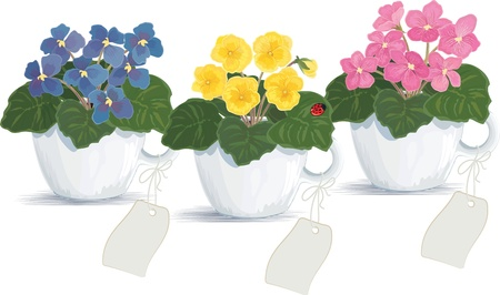 flowerpots: Pink, blue and yellow violets in flowerpots over white background. Illustration