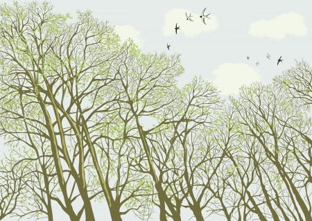 Intertwined branches of trees against cloudy sky in springtime Vector
