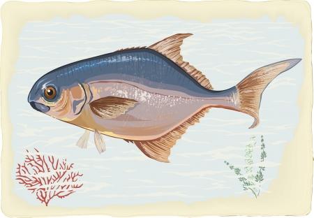 sea side: Pompano fish on retro style background Illustration