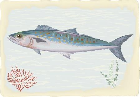 deep sea fishing: Mackerel on retro style background Illustration