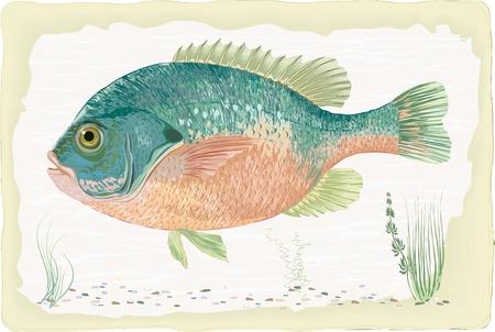 sunfish: Sunfish on retro style background