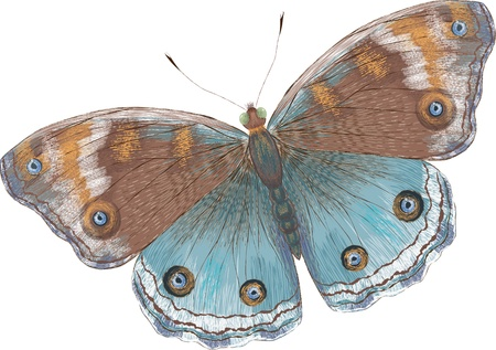 Beautiful butterfly over white background Ilustrace