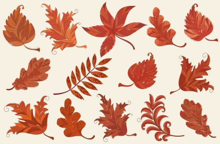 sycamore: Set of brown autumn leaves over light pink background