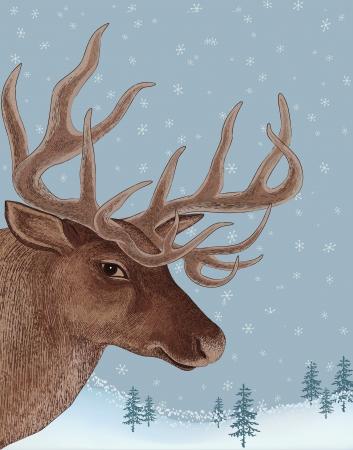 snowy background: Retrato de los ciervos en el fondo cubierto de nieve Vectores