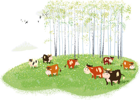 Herd of cows grazing on meadow on birches background Illustration