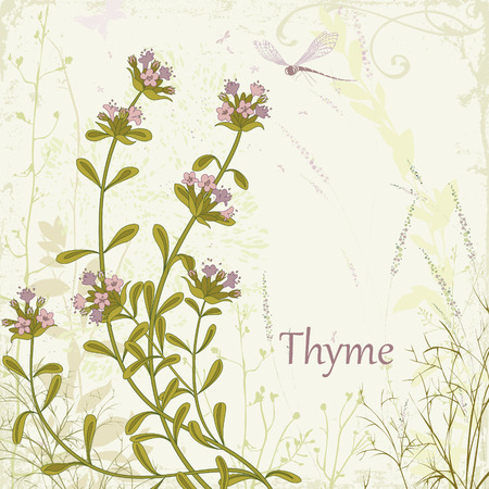 Thyme on herbal background Vector