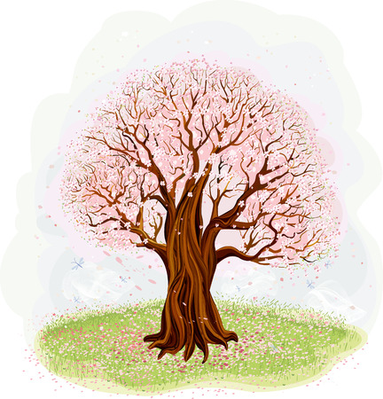 nature one painted: Vector illustration of blossoming old tree in the meadow Illustration