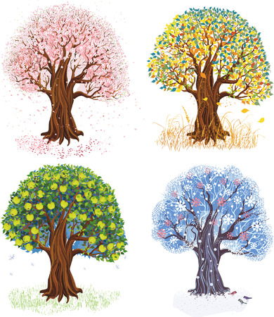 harvest time: Vector illustration of apple tree during four seasons