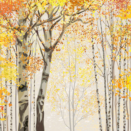 autumn trees: Birch grove in autumn time
