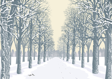 Prospect of an alley with snowy trees silhouettes in a park Vector