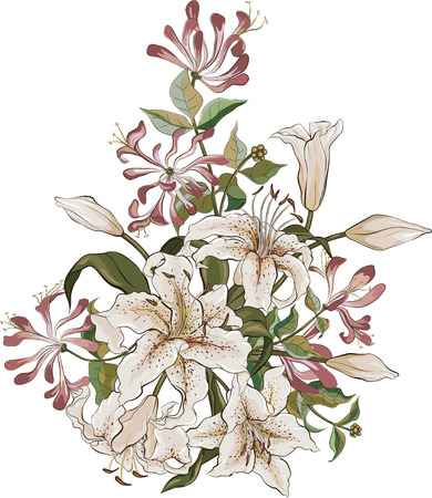 honeysuckle: Bunch of lilies and honeysuckle isolated on white background Illustration