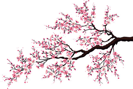 japanese background: Branch of a blossoming cherry tree isolated on a white background