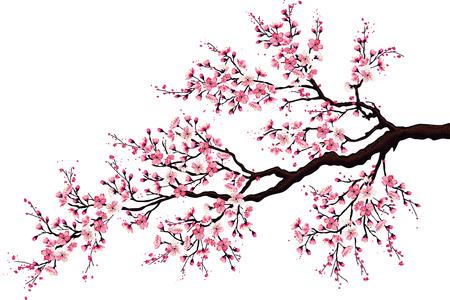 arbol de cerezo: Rama de un árbol de cerezo en flor aislado en un fondo blanco Vectores