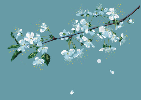 Branch of a blossom cherry tree on a blue background