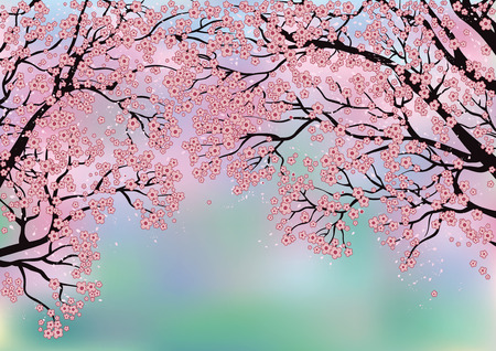 cherry blossom tree: Branches of blossoming trees on a background created with Mesh tool Illustration