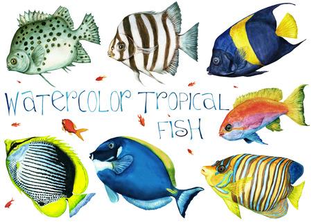 peces de acuario: Dibujado a mano de la acuarela peces tropicales sobre un fondo blanco