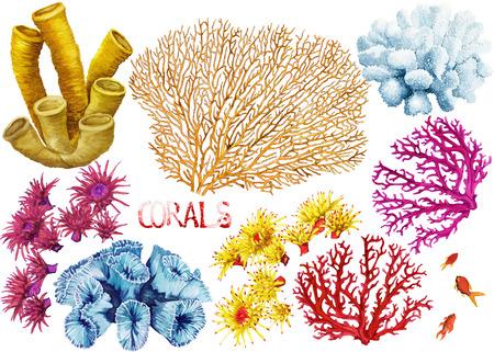 Aquarell handgezeichneten Korallen auf weißem Hintergrund Standard-Bild - 39392731