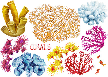 large group of animals: Watercolor hand drawn corals on a white background