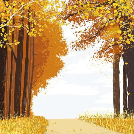 森の紅葉の間のパスのある風景します。