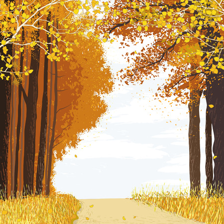 Landscape with path between autumn trees in the forest Stock Vector - 41493499