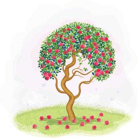 pomme rouge: Pommier rouge aux pommes tombées dans la prairie Illustration