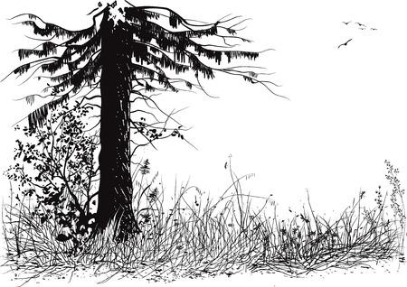 arbol de pino: Silueta del árbol de pino y pasto Vectores