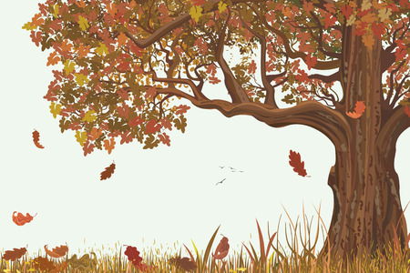 a tree: Autumn landscape with oak tree