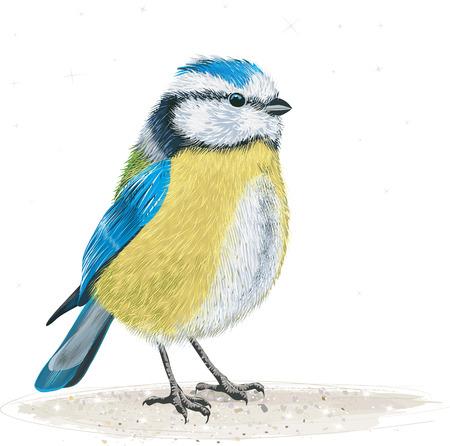 Tit azul en el suelo Ilustración de vector