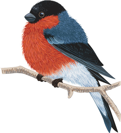 Bullfinch sitting on a tree branch isolated on white background Illustration