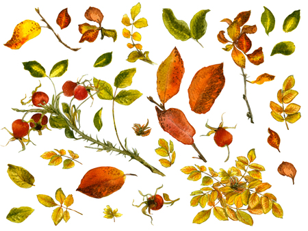 autumn garden: Watercolor set with gold and red leaves, rosehip berries and twigs isolated on white background Stock Photo