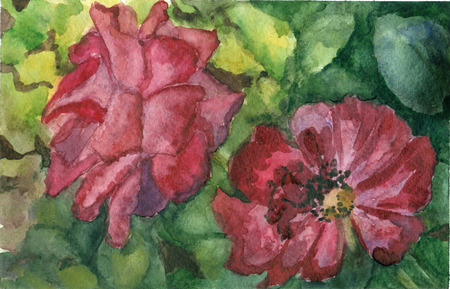 nature one painted: Watercolor hand drawn red rose on green leaves background