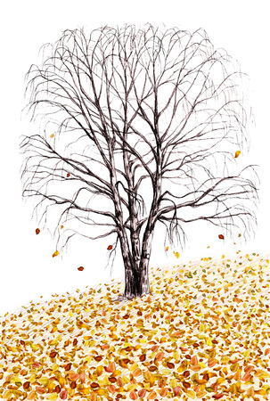 fallen tree: Birch tree and fallen leaves hand drawn illustration isolated on white background