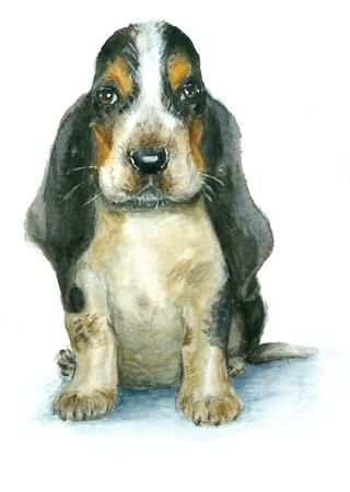 basset hound: Watercolor basset hound puppy on white background Stock Photo