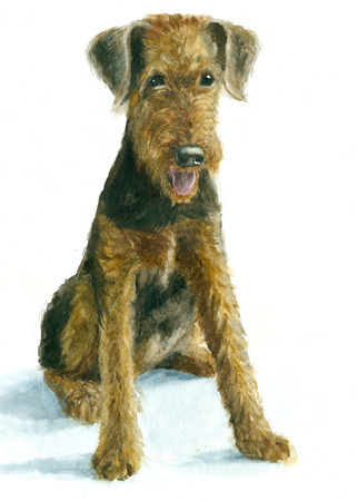 Watercolor Airedale puppy on white backgroun