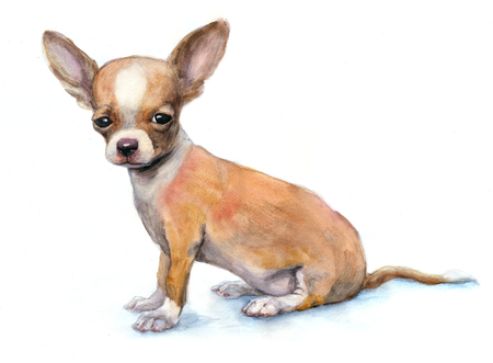 Watercolor Chihuahua puppy on white background