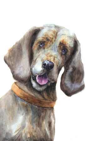 Watercolor dog on white background
