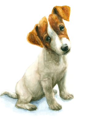 jack russell terrier puppy: Watercolor Jack Russell Terrier puppy on white background