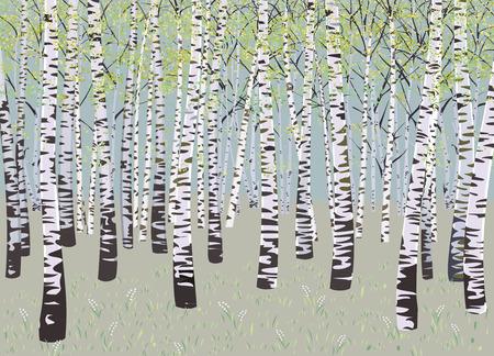 birch bark: illustration birch grove in spring time