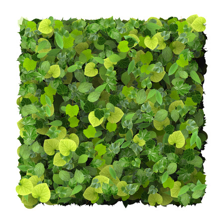 green wallpaper: Square made from green leaves isolated on white background. 3D render. Stock Photo