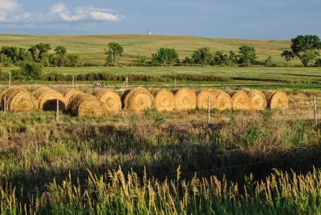 Row of round bales of hay in setting sunlight under bright blue sky photo