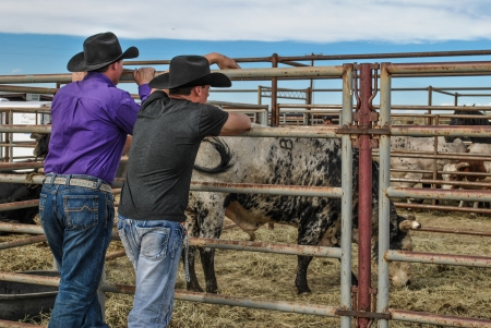 penned: Two cowboys at a country rodeo looking at the bulls in the pen  Editorial