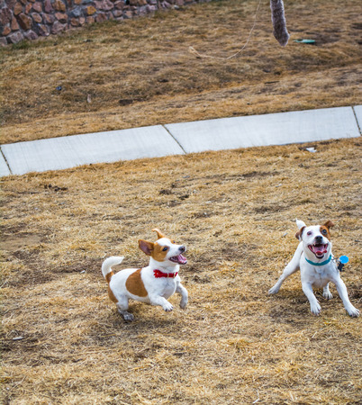 Two healthy puppies playing outside