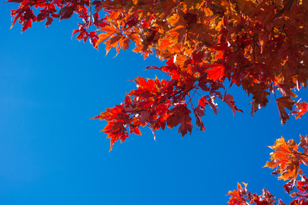 Fall leaves and blue sky on a sunny day with space Stock Photo