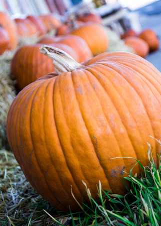 Row of pumpkins at pumpkin patch outdoors in fall