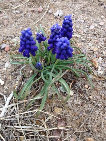 Pretty springtime flowers growing